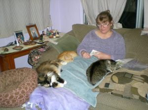 Sandy and bunch of cats